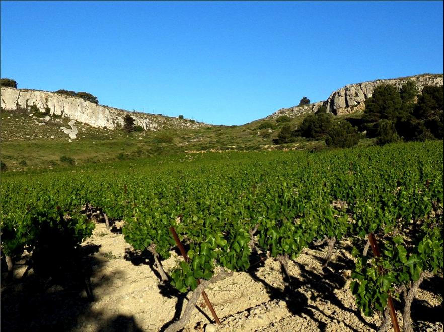AOC Coteaux du Languedoc - La Clape